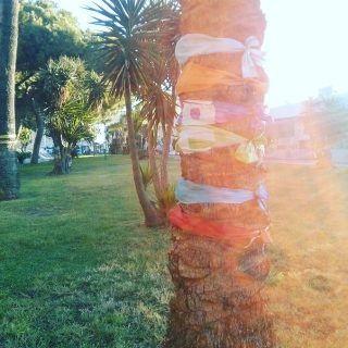 Beautiful Peace Tree on Sicily 🌿 #nature #toptags @top.tags #sky #sun #summer #beach #beautiful #pretty #sunset #sunrise #blue #flowers #night #tree #twilight #clouds #beauty #light #cloudporn #photooftheday #love #green #skylovers #dusk #weather #day #red #iphonesia #mothernature